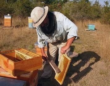 Je me souviens des ruches de mon grand-père
