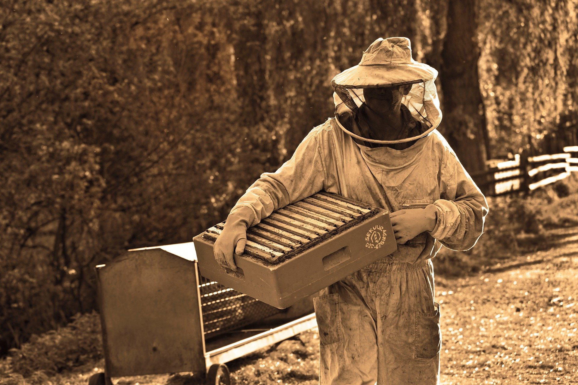Est-il possible d'adopter des abeilles ?